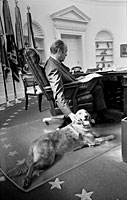 President Ford and his golden retriever, Liberty, in the Oval Office. November 7, 1974.