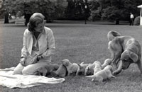 First Lady Betty Ford  and her pet golden retriever,  Liberty, watch over Liberty's puppies on the South Lawn of the White House.   October 5, 1975.